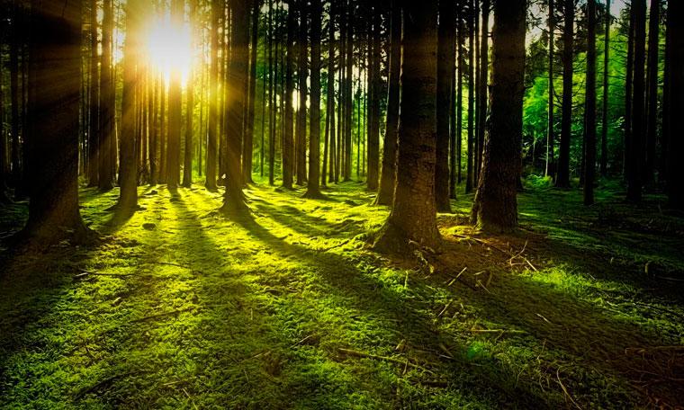 Bosque sostenible de arboles